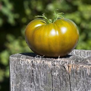 Сорт томата Изумрудное яблоко