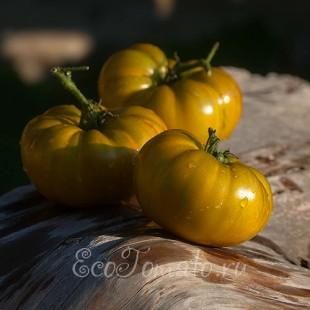 Сорт томата К 55-62 (Мексиканский зеленый), Украина