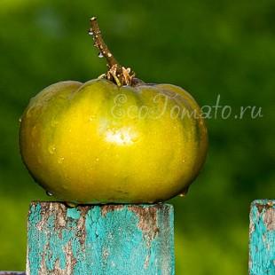 Сорт томата Max's Large green (Большой зеленый Макса), США
