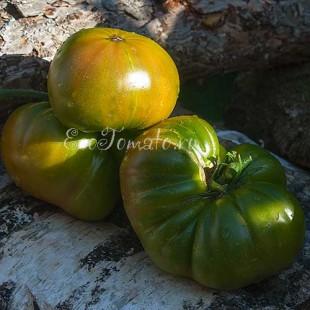 Сорт томата Quapaw Green (Квапа грин)