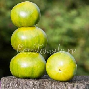 Ирландский ликер (1 пакетик - 10 семян)