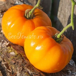 Amana Orange (Амана Оранж), США