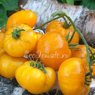 Сорт томата Mennonite Orange (Оранжевый меннонит), США