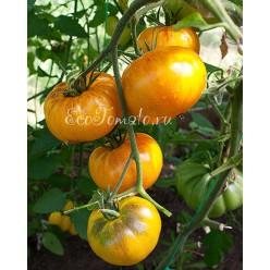 Mennonite Orange (Оранжевый меннонит), США