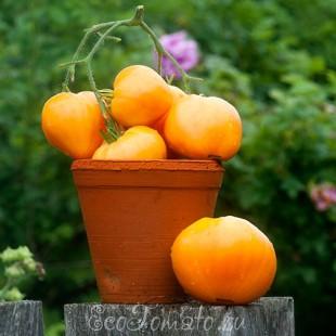Сердце Ашхабада, редкий сорт томата