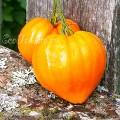 Orange Strawberry (Клубника Оранжевая), США