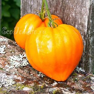 Сорт томата Orange Strawberry (Клубника Оранжевая), США