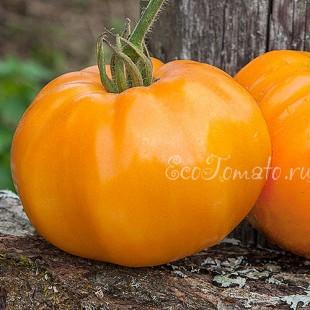 Сорт томата Sweet Ozark Orange (Сладкий оранжевый Озарк), США