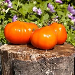 Трюфель оранжевый