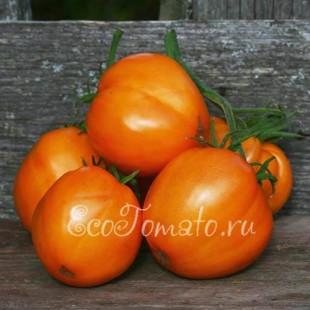 Сорт томата Воловье сердце, оранжевое