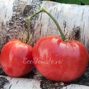 Сорт томата 1884 Strawberry Wedge (1884 Клубничный клин), США