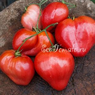 Сорт томата Донские (сердцевидный)