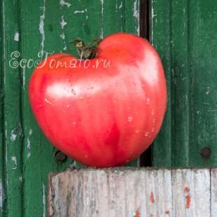 Сорт томата Дуралевские