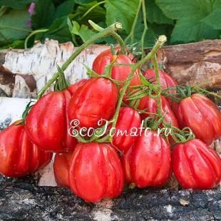 Сорт томата Gezante Tomato Buhrer-Keel (Зубчатый помидор), Италия