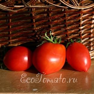 Сорт томата Гумпер