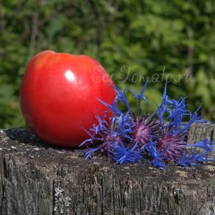 Сорт томата Hungarian Oval (Венгерский овал), США
