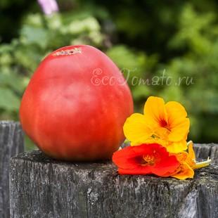 Сорт томата Ивановские