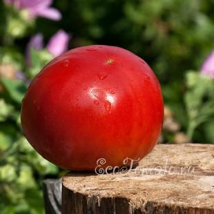 Сорт томата Китайский розовый