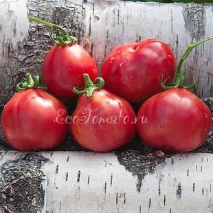 Сорт томата Крымская Роза