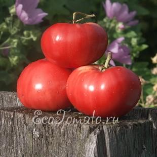 Сорт томата Крымские