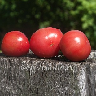 Сорт томата Малиновый Ожаровский