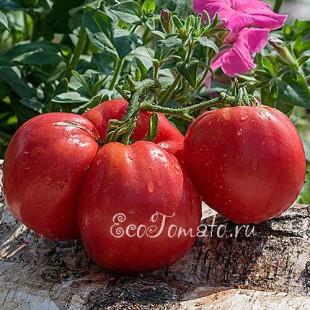 Сорт томата Мазарини