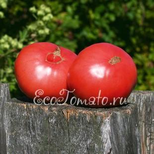 Сорт томата Медвежье сердце