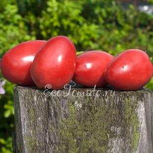 Сорт томата Перцевидный Розовый