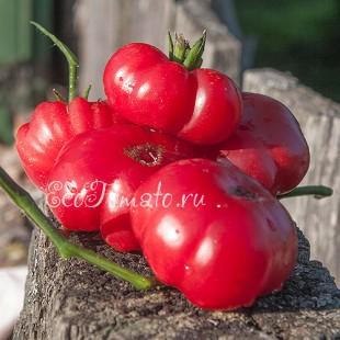 Сорт томата Pink Smudge (Розовый смог)