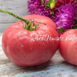 Сорт томата Подушка Розовая, Казахстан