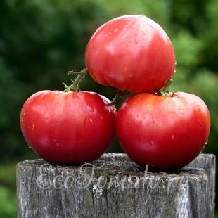 Сорт томата Приамурский Крупноплодный