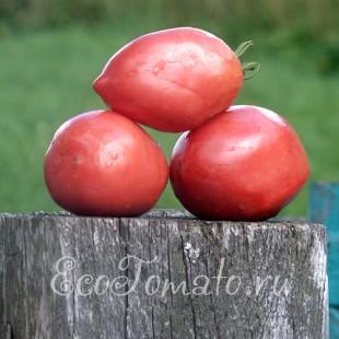 Сорт томата Рак (Томатный гороскоп)