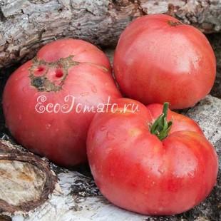 Сорт томата Rosado de la Sierra Aracena (Росадо де ла Сиерра Арачена), Испания