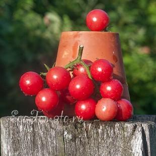 Сорт томата Розовый кварц