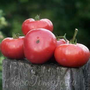 Сорт томата Розовый изюмный