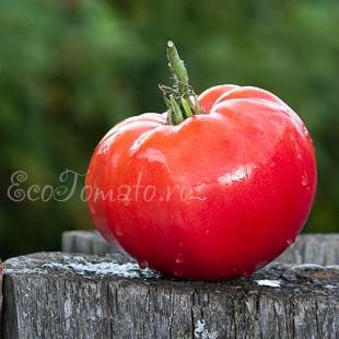 Сорт томата Саратовские