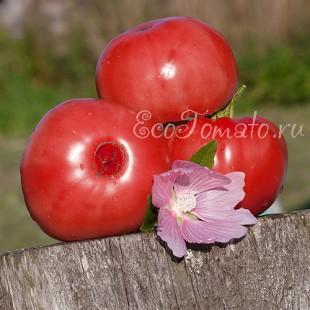 Сорт томата Schlesische Himbeere (Силезская Малина), Германия