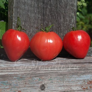 Сорт томата Сердце Дракона