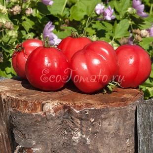 Сорт томата Шарпей розовый