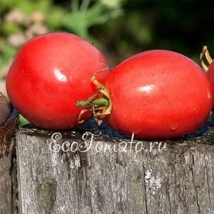Сорт томата слива-малина