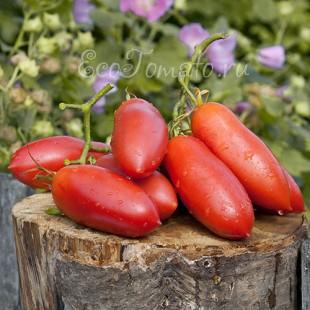 Сорт томата Сосулька Розовая