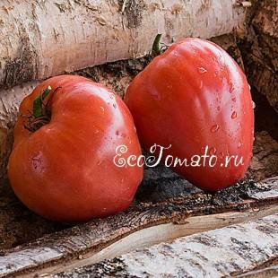 Сорт томата Вельможа