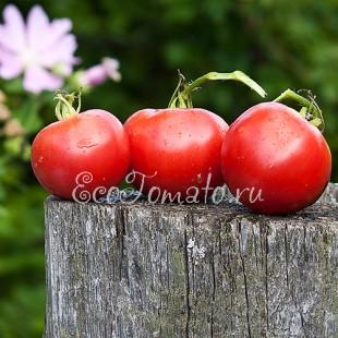 Сорт томата Визирь