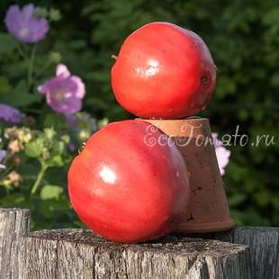 Сорт томата West Virginia Sweetmeat (Конфеты Западной Вирджинии), США