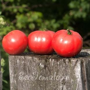Сорт томата Яблоки Сибири