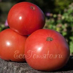 Сорт томата Розовый Рафаэлло
