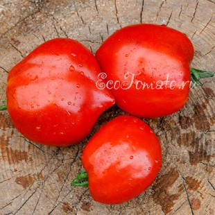 Сорт томата Belmonte Cuore (Бельмонте Куор), Италия