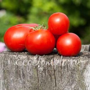 Сорт томата Bloody Butcher (Кровавый мясник, Нидерланды )