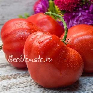 Сорт томата Буденовка