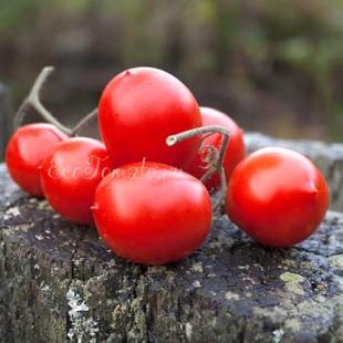 Сорт томата Christmas grapes (Кристмас грейпс, Рождественский виноград)